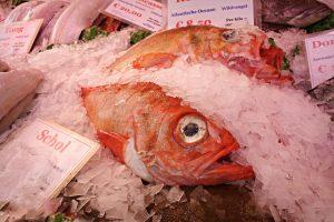 fish-1523118_1280