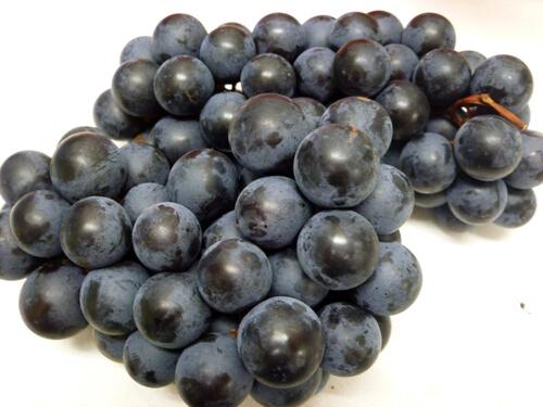 種無し葡萄