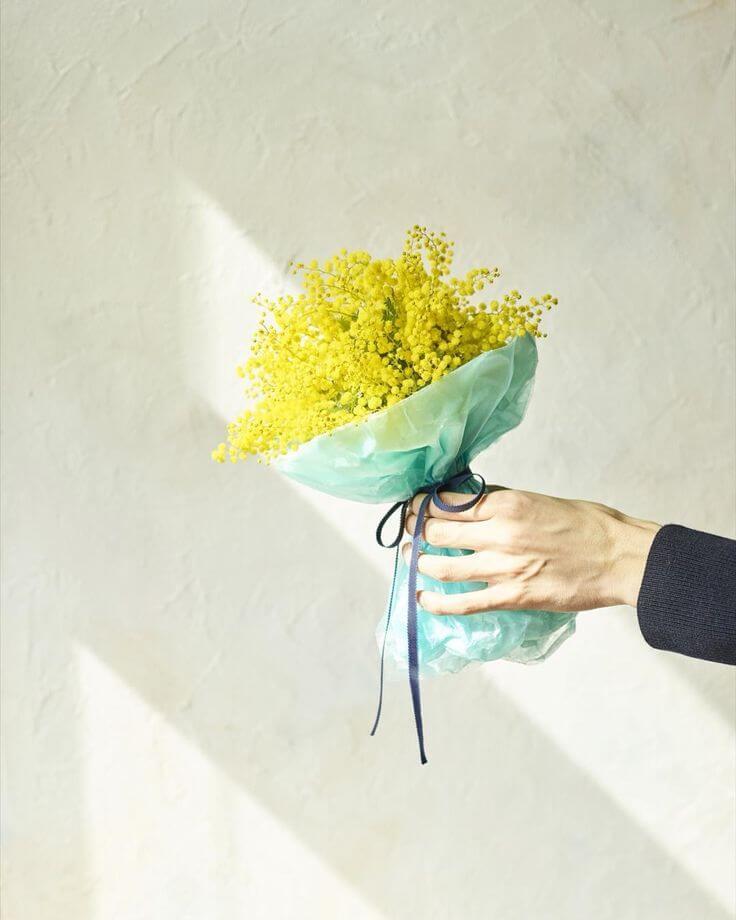 f8d96feb2d40df3d672ada26be77b836--mimosas-flora