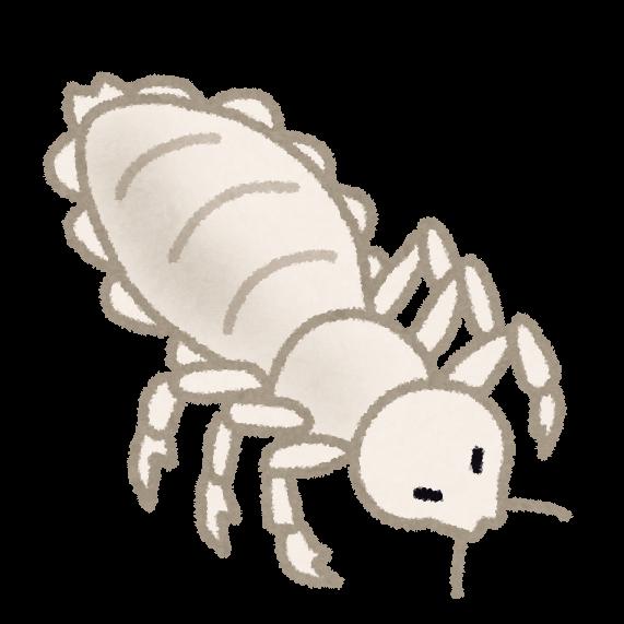 bug_shirami