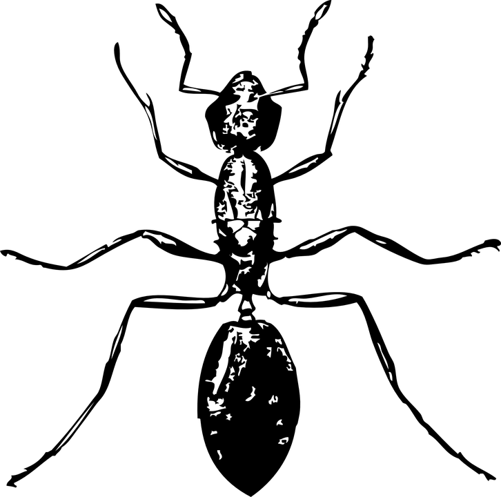 ant-32920_960_720