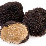 depositphotos_6412840-stock-photo-black-truffles