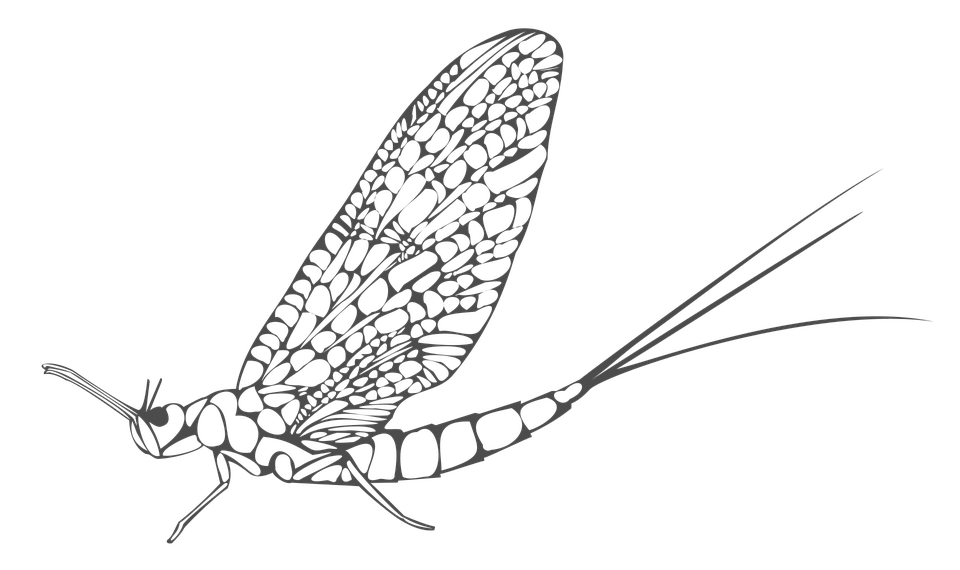 ephemera-1638225_960_720