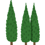 plant_itosugi