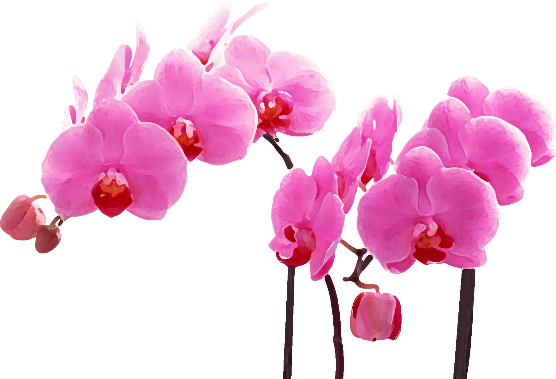 flower4818i